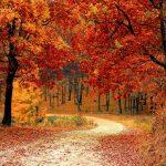 message d'automne